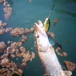 Lago lipless 8,5 cm