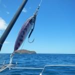tuna Madagascar 1